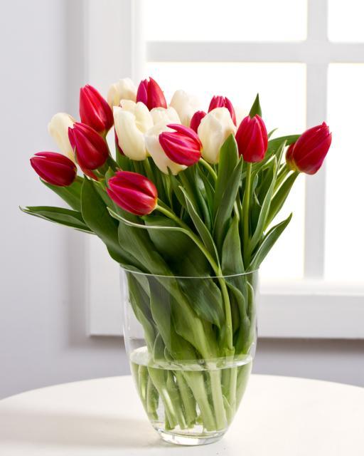 Baltų ir raudonų tulpių puokštė